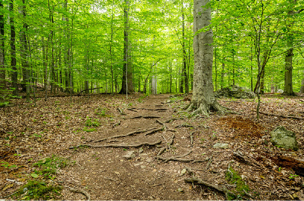 Running and sprinting in the woods for cardiovascular fitness