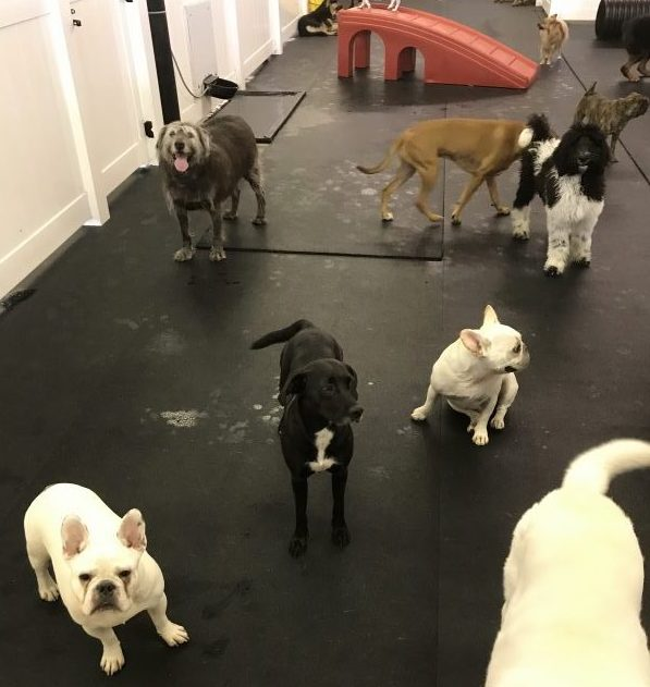 Rubber Mats and Rolled Rubber For Dog Daycare Facilities
