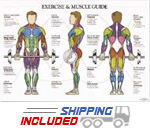 Men's Exercise & Muscle Guide Chart