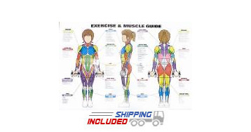 Women's Exercise & Muscle Guide Chart