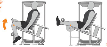 Leg Extension Machine Exercises
