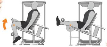 Leg Extension Machine Exercises