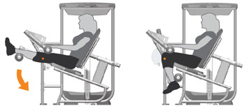 Seated Leg Curl Machine Exercises